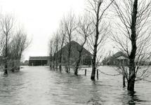 ZL_WATERSNOODRAMP_021 De oprijlaan naar de boerderij 'Bouwlust' van M. Blaak; Februari 1953