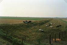 ZL_ZEEDIJK_04 Overzicht over de Beningerwaard vanaf de Zeedijk; 5 september 1991