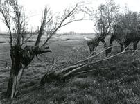 ZW_HOLLEMARE_001 Holle Mare gezien vanaf De Holle Maarse Dijk; ca. 1980