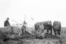 NLL042 Maaien op de boerderij van Arie Peters en Neeltje Arentje Nieuwland. Links: Andries Jan Peters (1928-1996), zoon ...