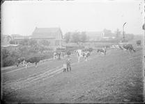 GN2653 Twee kinderen poseren tussen de koeien; ca. 1925