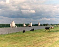 F013210 Zeilschepen van de bruine vloot varen op de IJssel. Hier met witte zeilen. Vroeger waren ze overwegend bruin..