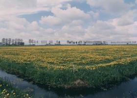 F013242 Landschap Kampereiland, op de horizon loopt de Heultjesweg.