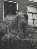 F000816 Het opslaan van hooi op de zolder verdieping van de stadsboerderij aan de Graafschap no. 12 door D. Sleurink.