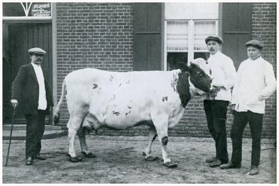 Slagerij Vonken: Fr. Vonken met de te slachten koe voor de oude slagerij. 1. Fr. Vonken;