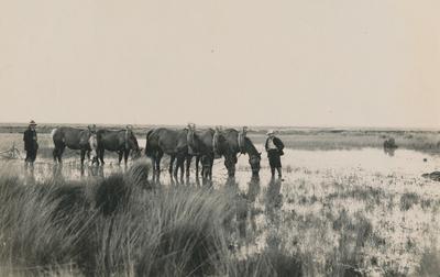 Serie van 10 foto's tijdens de ontginning van Someren Heide